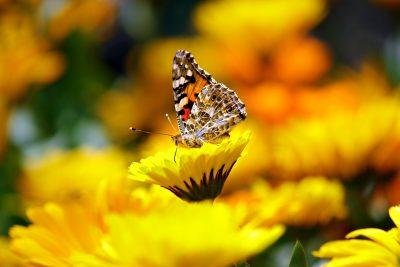 butterfly-169924_1920